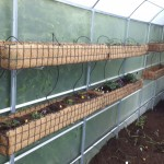 Newly planted troughs. Using the vertical space in your greenhouse can almost double growing potential.