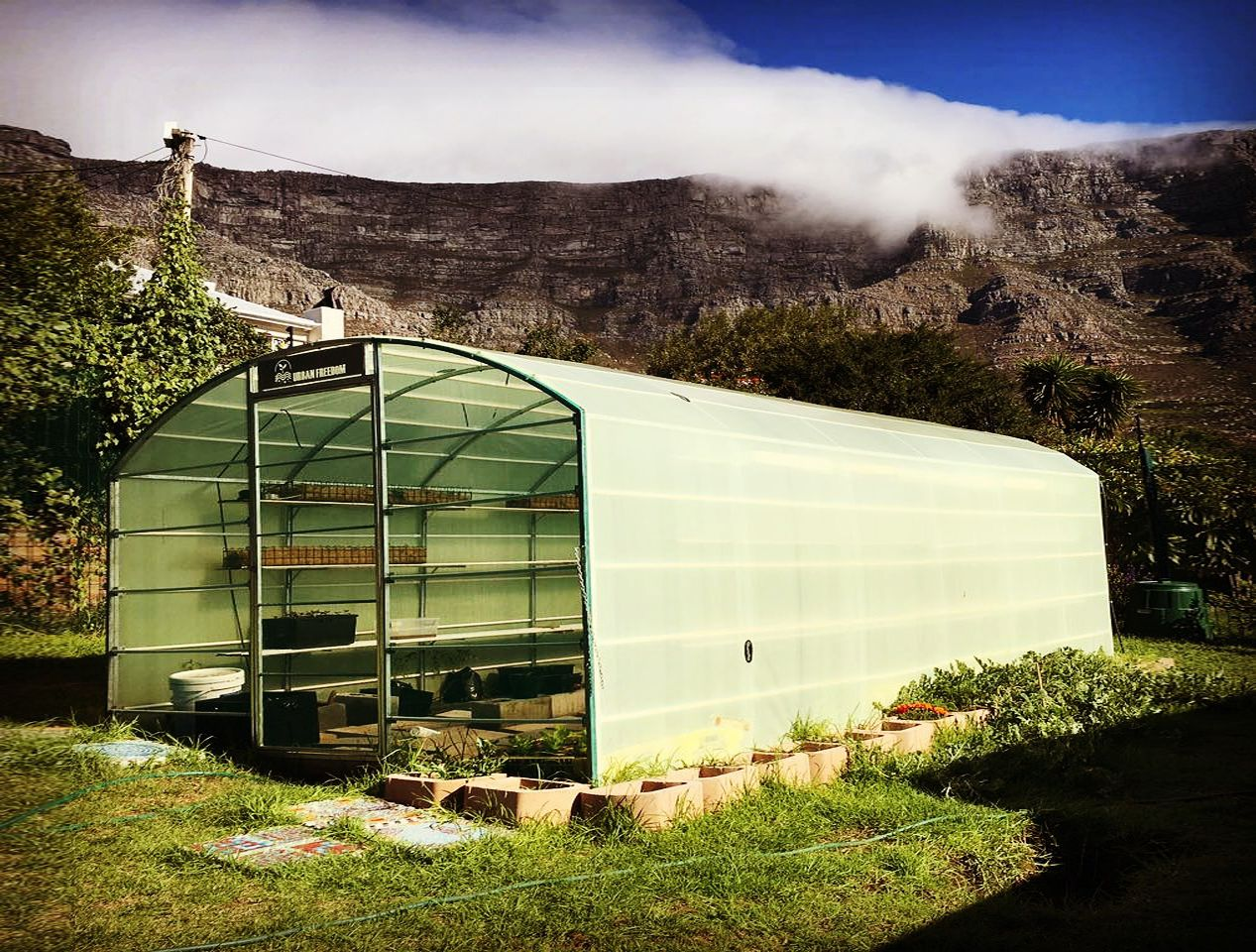 01-table-mountain-greenhouse-st